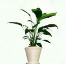 köpa inomhusväxter online